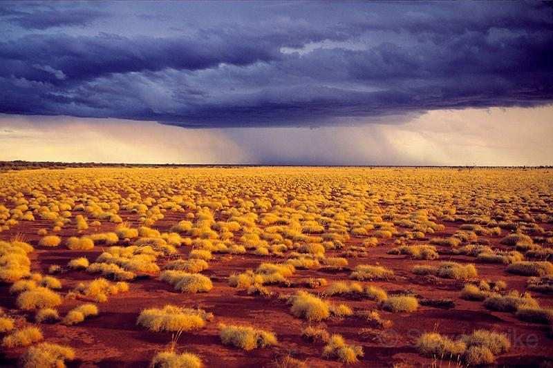 gibson çölü dünyanın en geniş 10 sıcak çölü