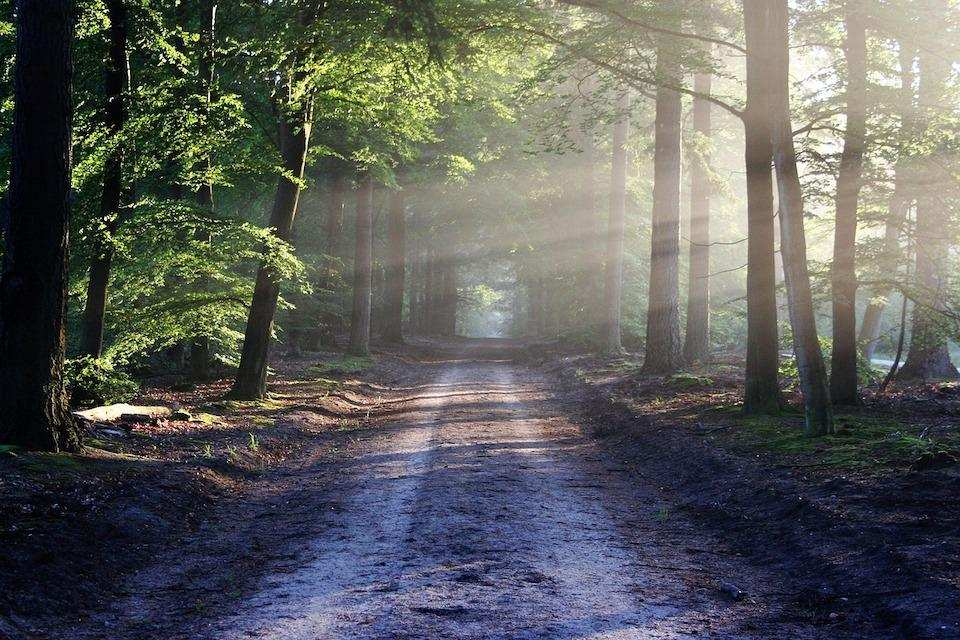 ters çaba kuralı orman yolu hedef