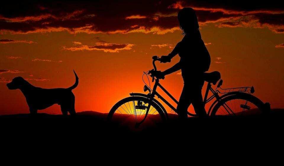 günbatımı bisikletli köpek