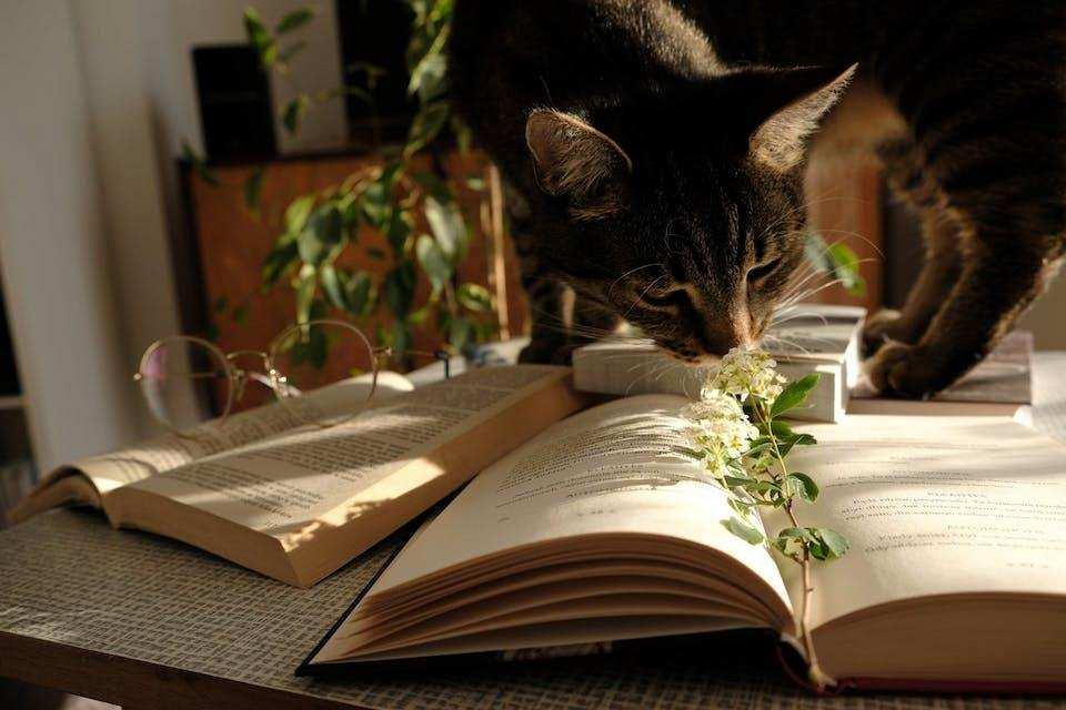 batı edebiyatında akımlar kitaplar çiçek kedi